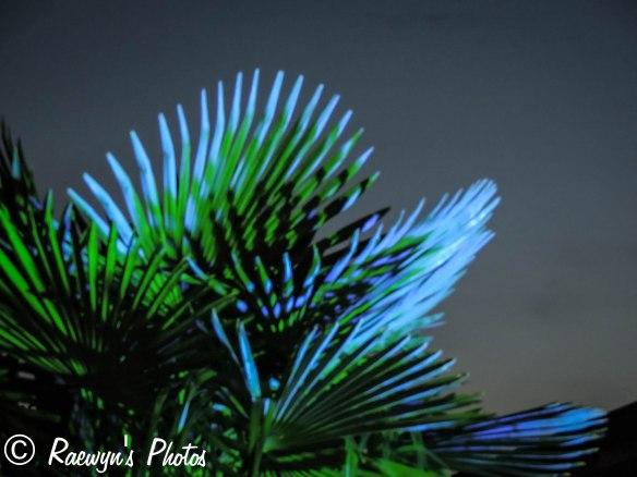Festival of Lights (5 of 1)