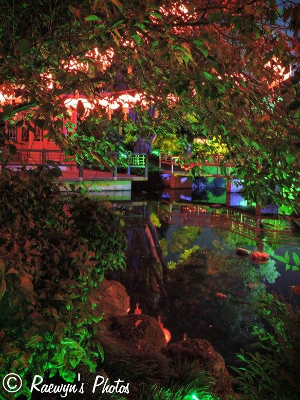Festival of Lights (7 of 1)