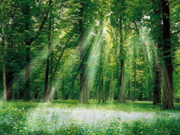 sunlight,sun,light
