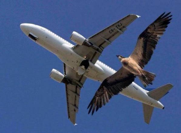 PlaneBird