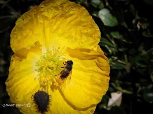 Autumn Poppies-231