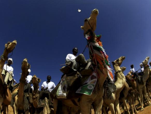 camel-hump-day-caleb-wednesday
