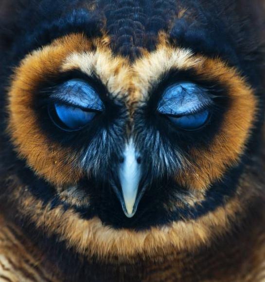 OwlEy