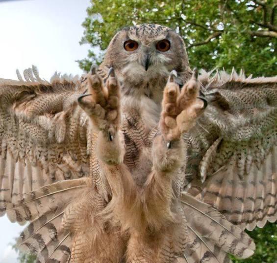 OwlTal