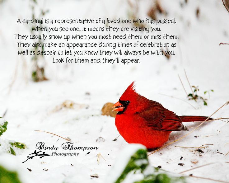 "The Red Birds have a special meaning …  ""Cardinals""!! 