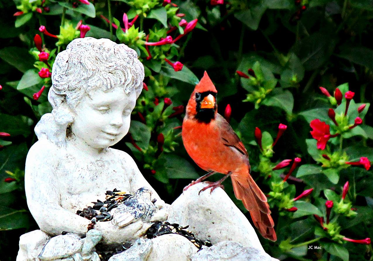 The red birds have a special meaning cardinals it is what it is a cardinal is a representative of a loved one who has passed when you see one it means they are visiting you they usually show up when you most need them biocorpaavc Image collections