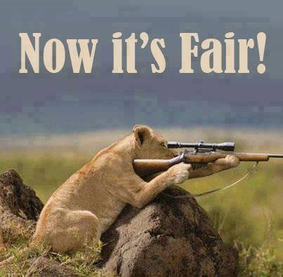 ShootFair