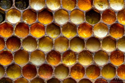 bee-hive-pollen-plants-nature