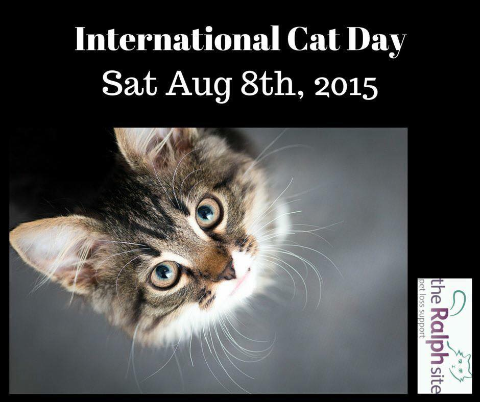 international cat day - photo #14
