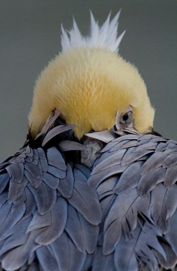 bird-peek-a-boo