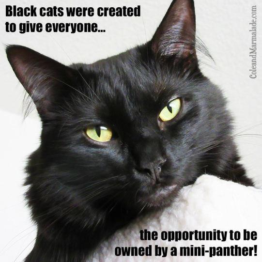 BlackPanth