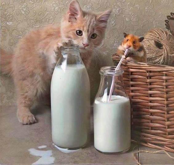CatMouseMilk