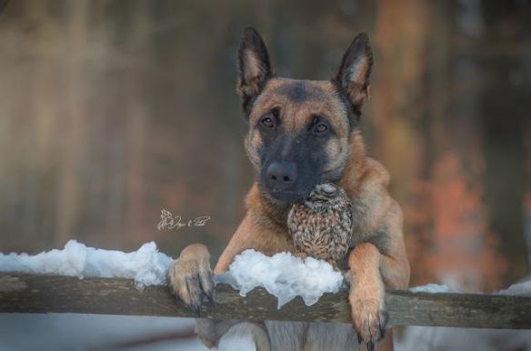 dogowl