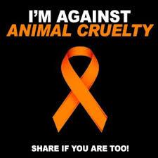 AnCruelty