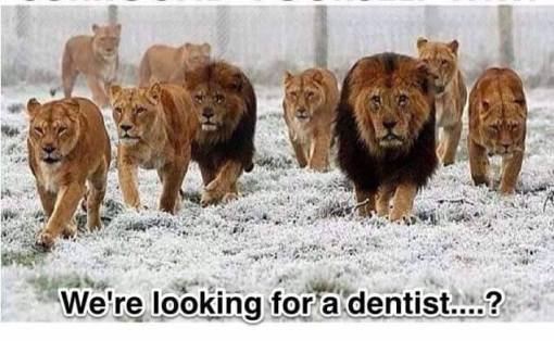 LionDent