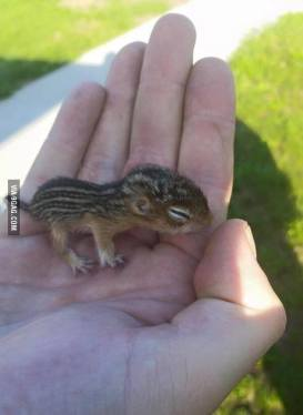 BabySquirrel