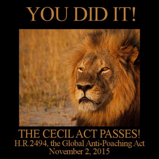 CecilAct