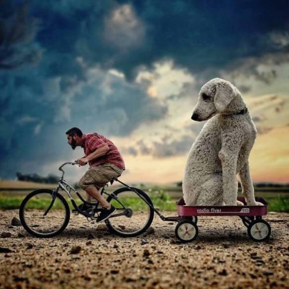 Christopher-Cline-goldendoodle-giant-dog