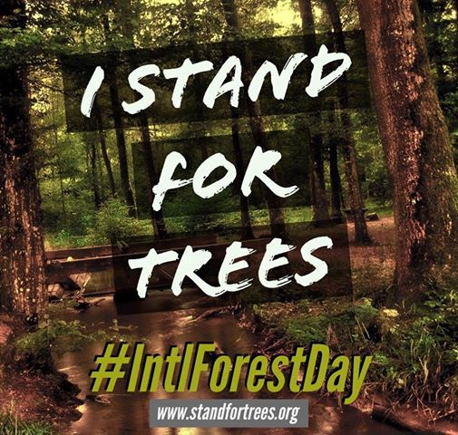 ForestDay