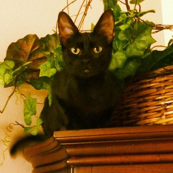 KittyTop