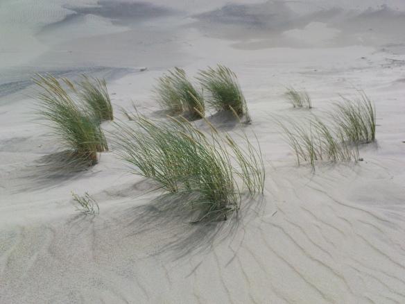 beach-summer-weekend-breeze-grass-sand-dunes