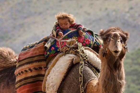 wednesday-camel-hump-day-cute-sleepy