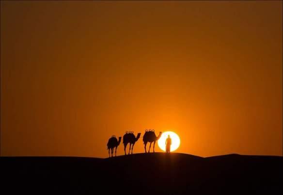 camel-sunset