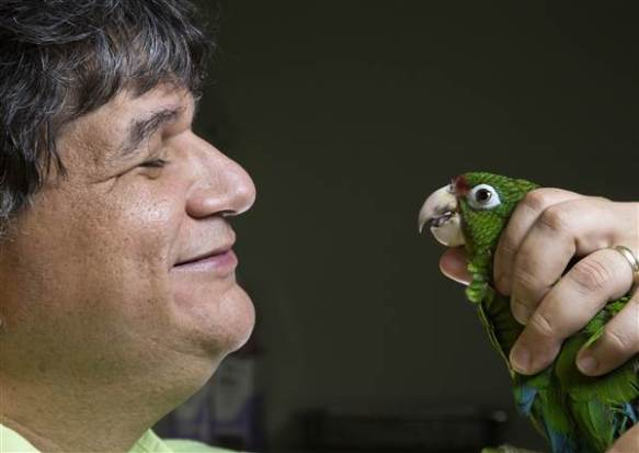 1-jafet-velez-inspects-the-health-of-a-rare-puerto-rican-parrot_9fe7c679caed4adfa1bf478830297fac.nbcnews-ux-600-480