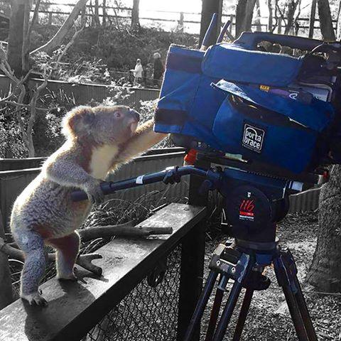 KoalaMovie