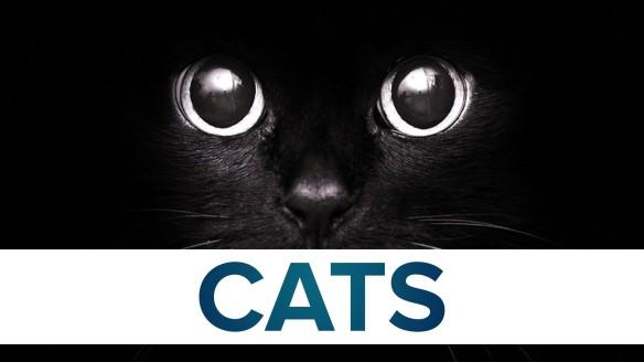 CatF2