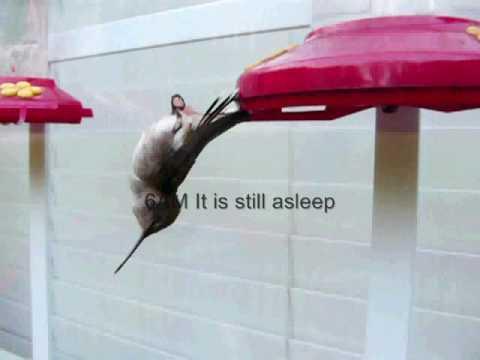 HSleep