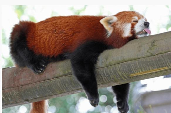 red-panda-e1534572781553.png