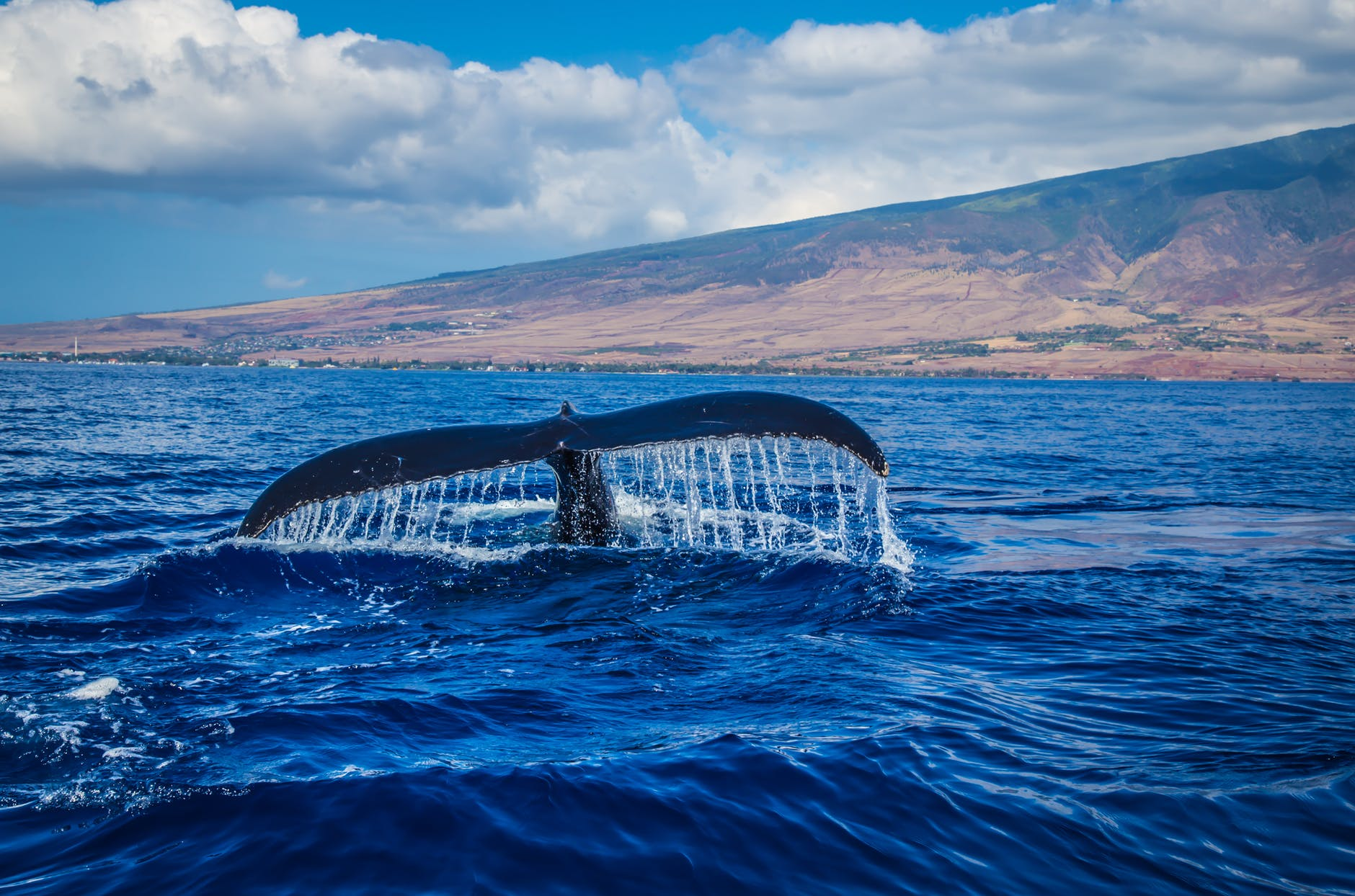 photography of whale tail in body of water