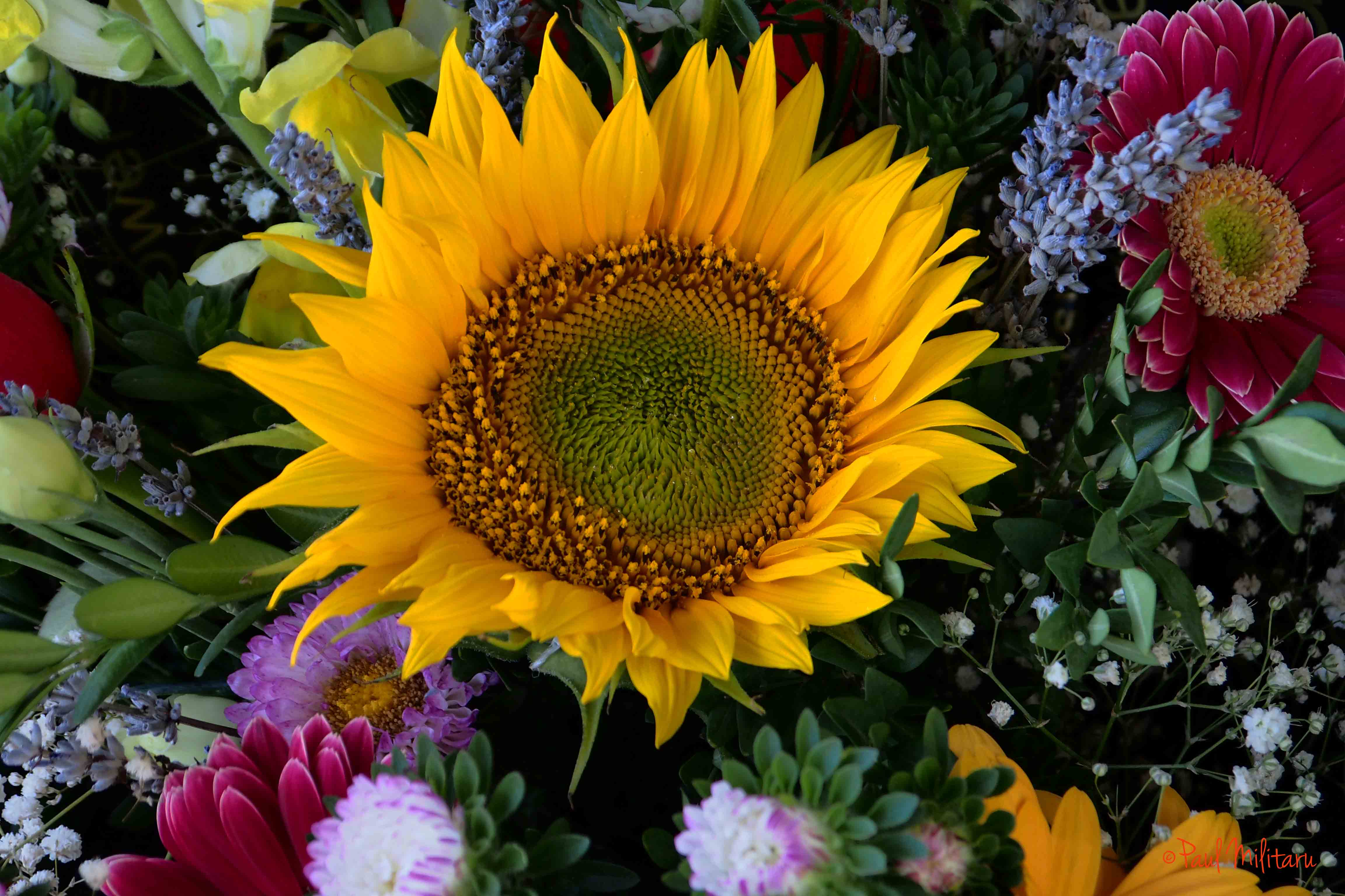 sunflower among other flowers